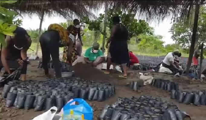 Adaklu youth urged to venture into cultivation of cashew, the 'new gold'
