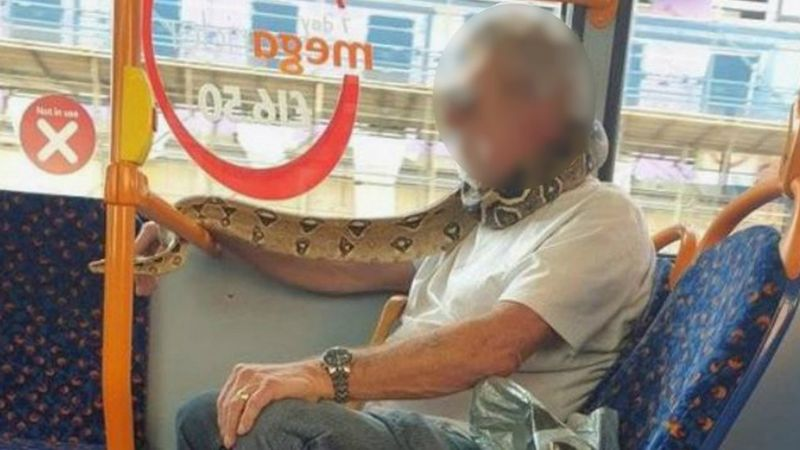 Snake used as face mask on bus [photo] 4