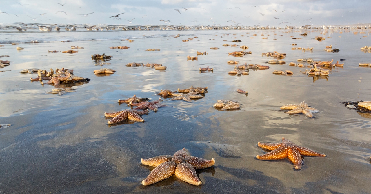 Message from the Morning Man: Starfish