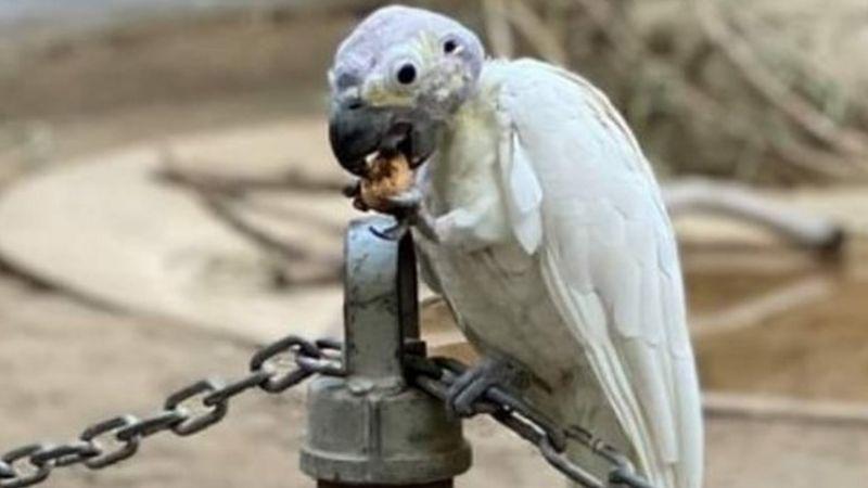 Public's help sought after rare birds stolen from California zoo