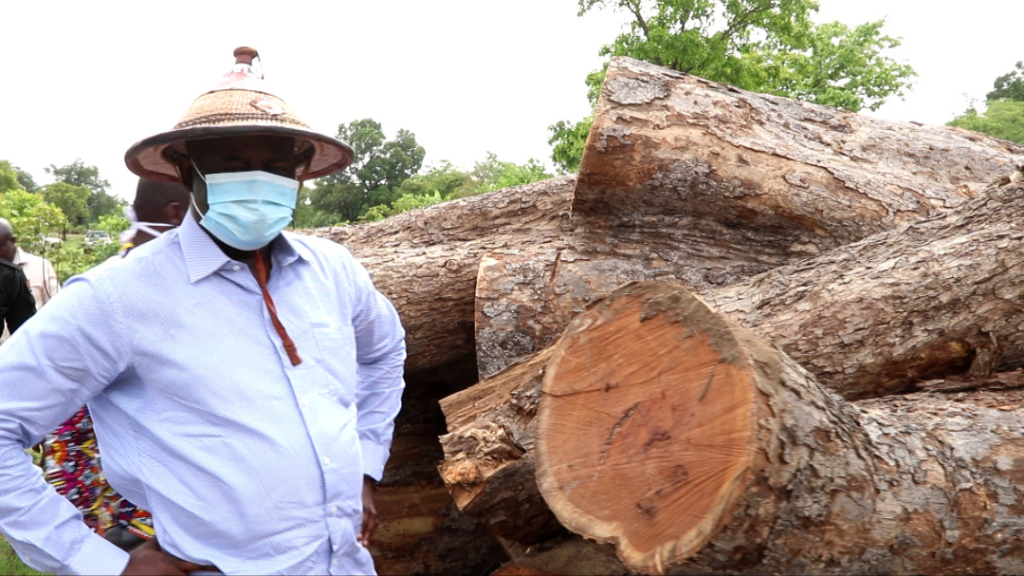 The law will deal with you if you engage in illegal felling of economic trees- UW Minister