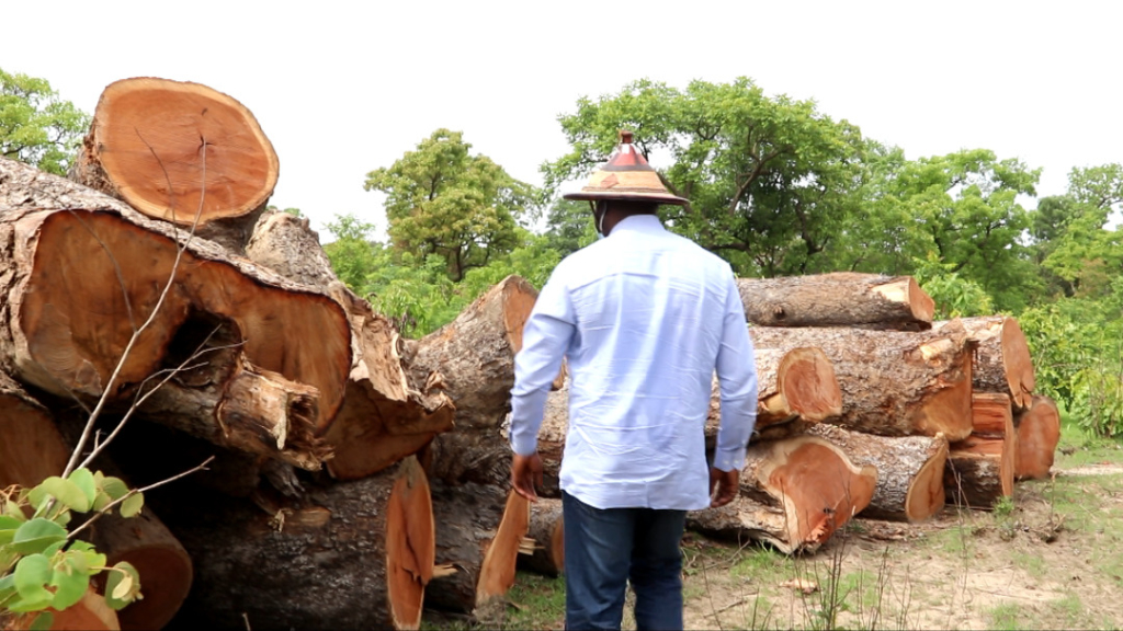 I'll deal with persons engaged in rosewood felling - Upper West Regional Minister