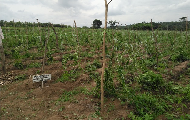 Yam farmers urged to adopt scientific farming methods to become internationally viable