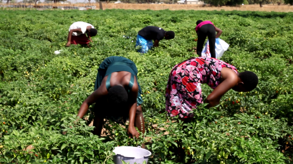 Upper East CSOs in Agric call for abolition of customary practice barring women from owning lands