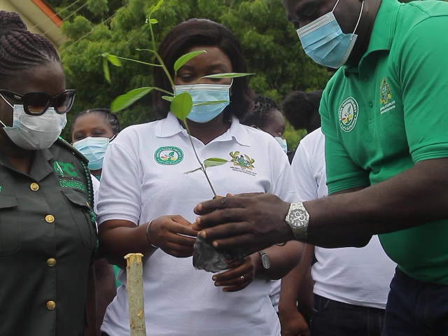 Black Stars join UCC, Forestry Commission to plant nearly 600,000 trees in Central Region