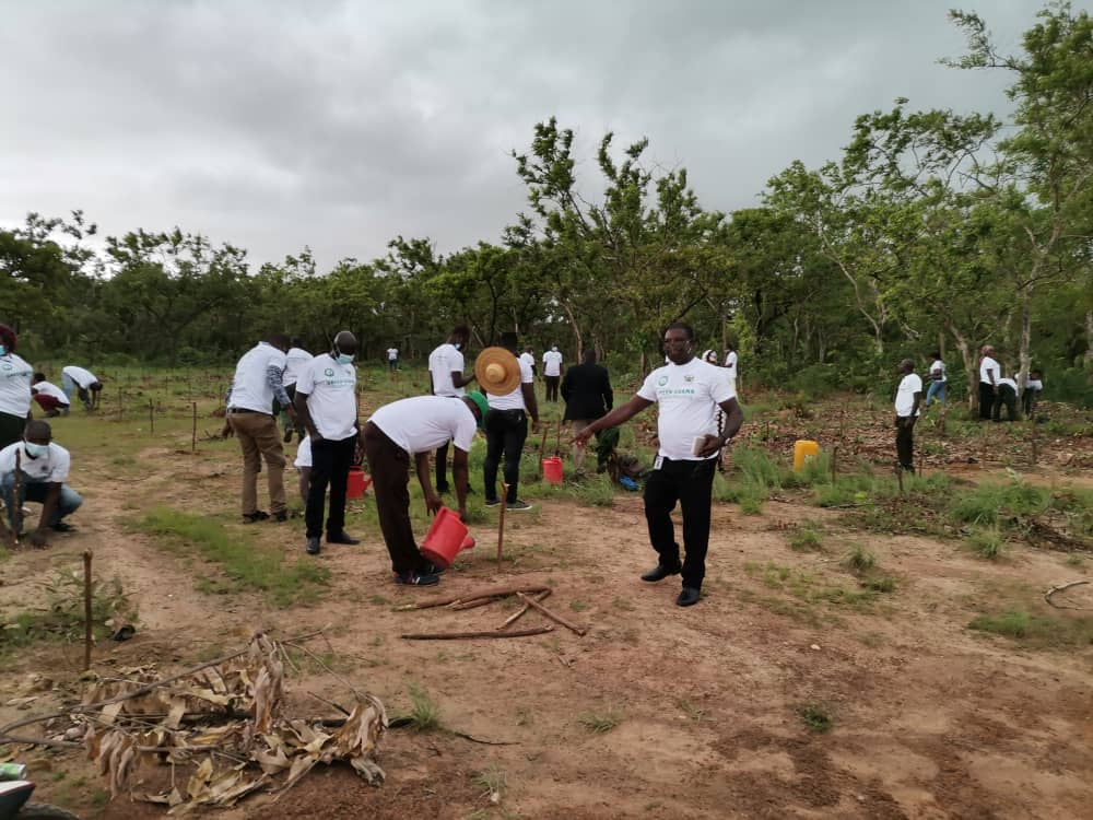 Don't just plant trees, nurture them to grow - Upper West Regional Minister