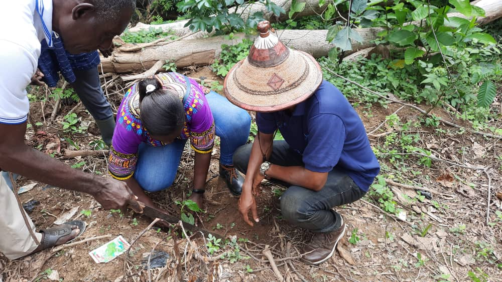 A Rocha Ghana, INEC, Water Resources Commission plant 2,000 trees at Lake Bosomtwe