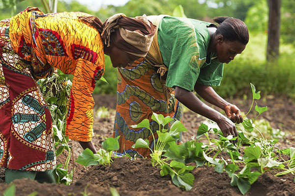 Give us enough farmland to boost crop production - Women farmers association to chiefs