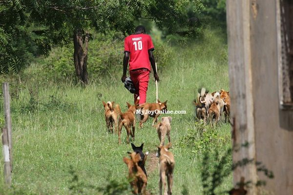 Wildlife Division of Forestry Commission urged to strictly enforce ban on hunting
