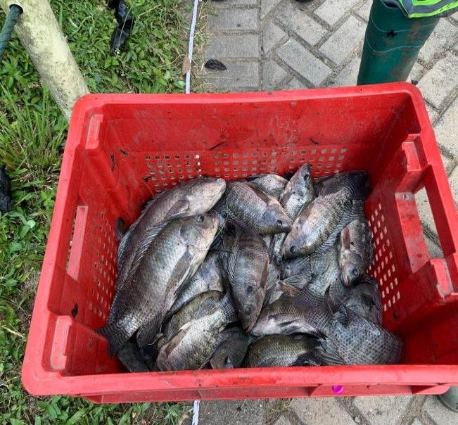 Streams at our mines produce healthy, edible fish – Gold Fields Ghana