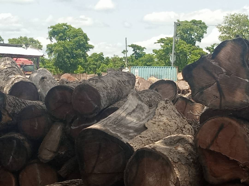 Savannah Regional House of Chiefs reverses 1-month window on uncollected logs