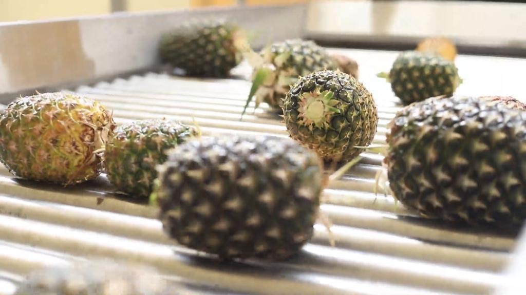 ADB, distributors of Eku Juice tour Ekumfi Fruit and Juices Factory