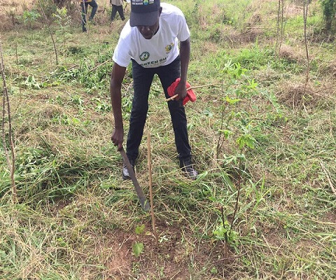 Forestry Commission sets-up inspection team under Green Ghana Project in Bono Region