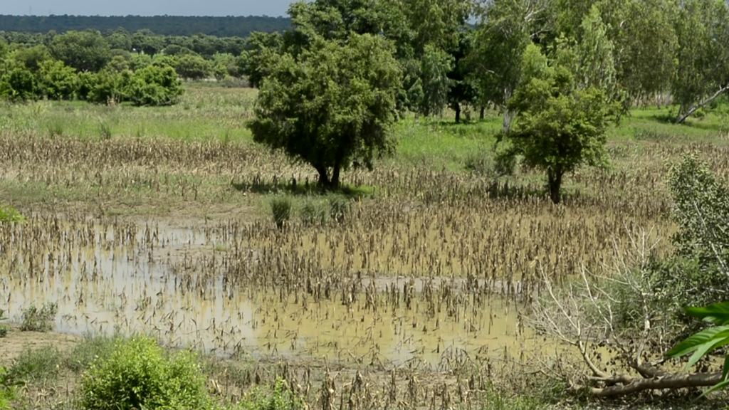 Farmers in Upper East brace for impact of Bagre dam spillage