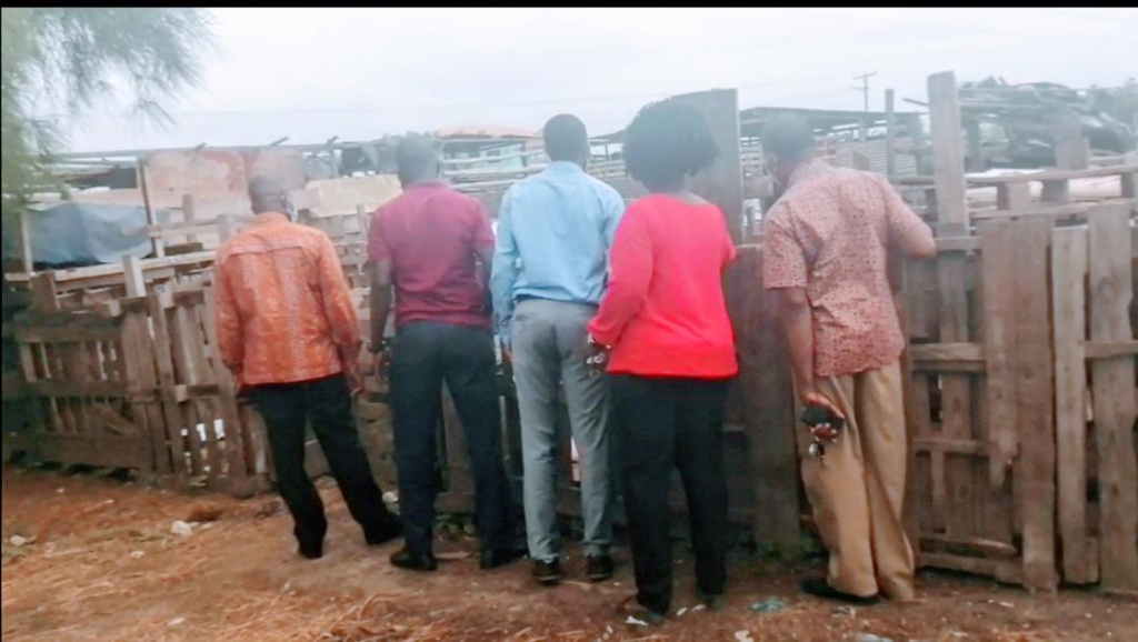 We've lost about ¢720k to African Swine fever – Saki pig farmers
