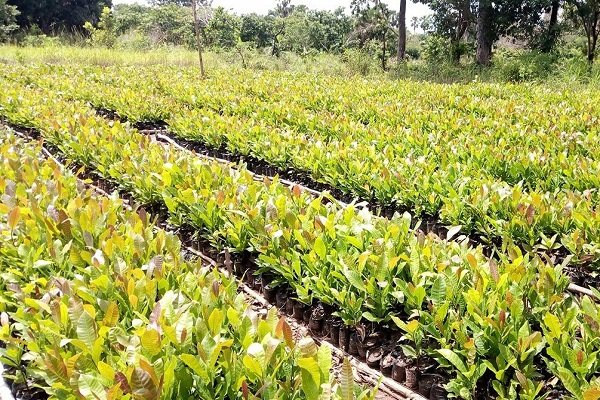 Wenchi MCD affirms government's commitment to enhance agribusiness in the area