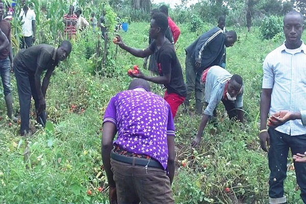 African leaders urged to invest in youth in agriculture to help mitigate climate change impact