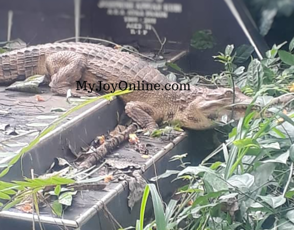 Strange crocodile invades Chiraa cemetery, residents living in fear